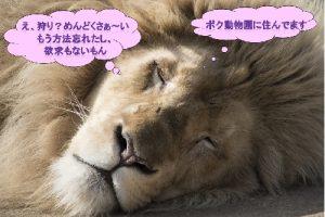 野生を失ったライオン